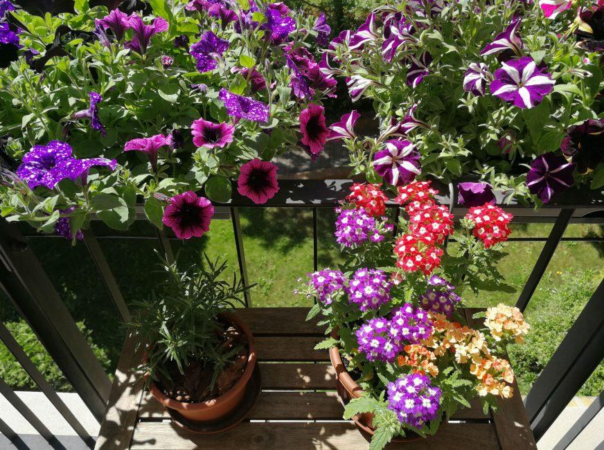 Színes Virágzó Balkon
