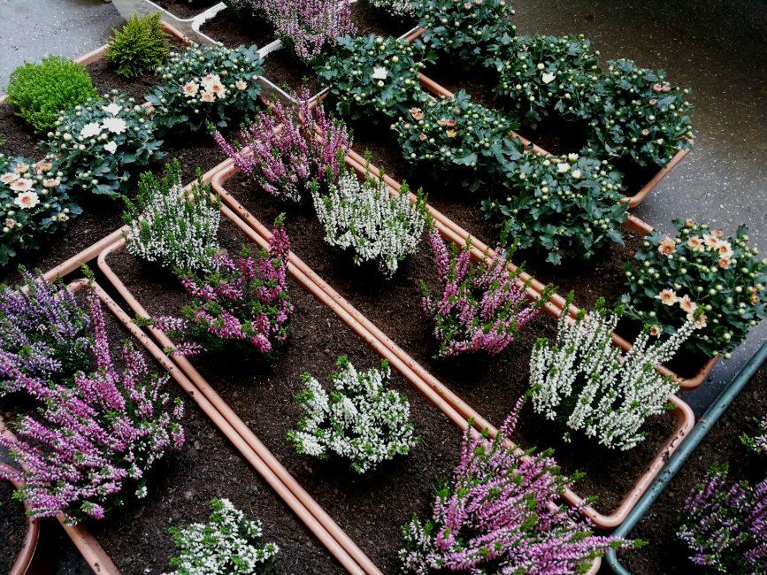 Őszi balkonszezon növényei beültetve